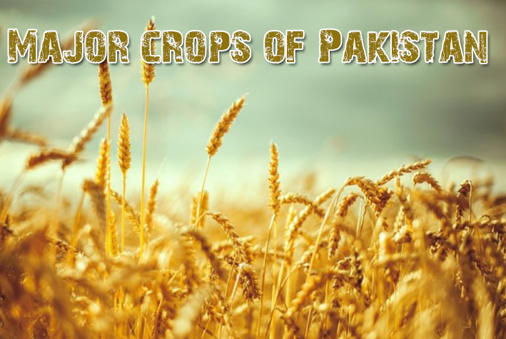 Crops of Pakistan